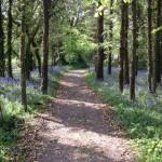 Woodland walk Ballymaloe House