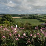 Ardfield Farmhouse Bed and Breakfast - Bedroom Views